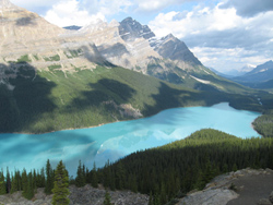 A random beautiful photo of Peyto Lake - one of our stops on Day 2